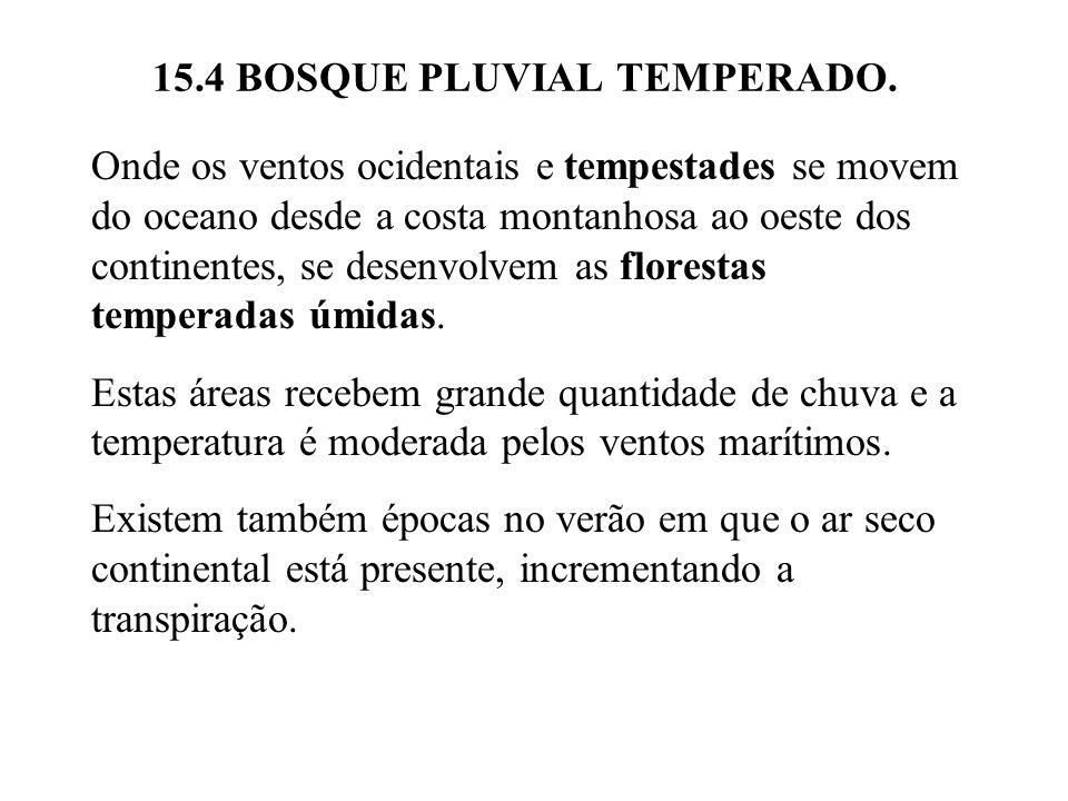 15.4 BOSQUE PLUVIAL TEMPERADO.