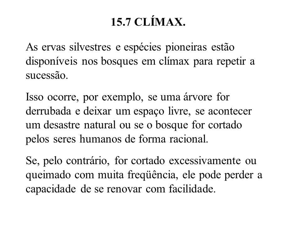 15.7 CLÍMAX. As ervas silvestres e espécies pioneiras estão disponíveis nos bosques em clímax para repetir a sucessão.