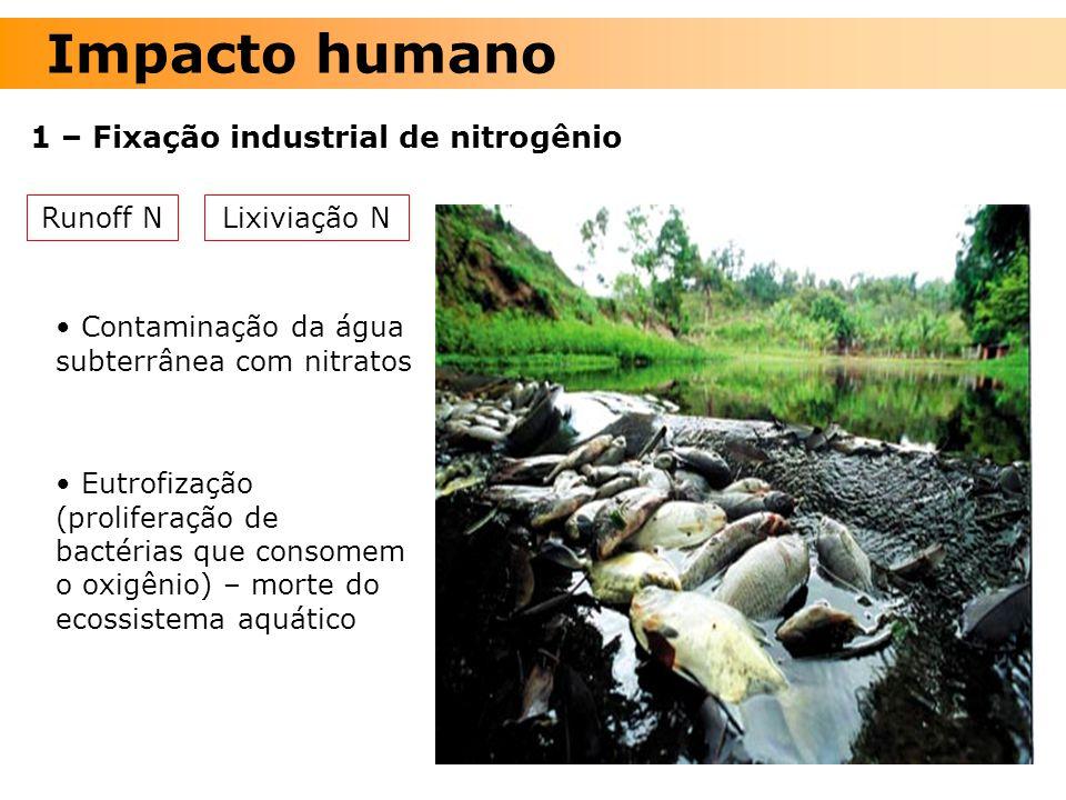 Impacto humano 1 – Fixação industrial de nitrogênio Runoff N