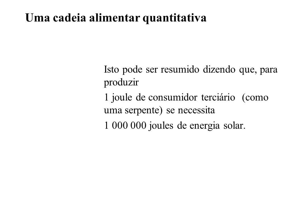 Uma cadeia alimentar quantitativa