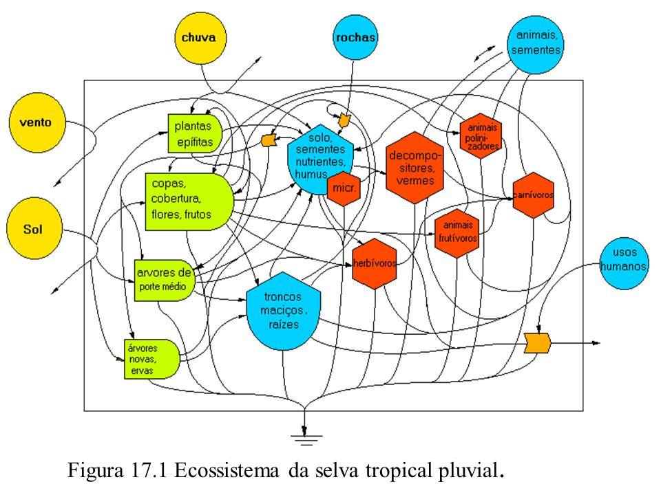 Figura 17.1 Ecossistema da selva tropical pluvial.