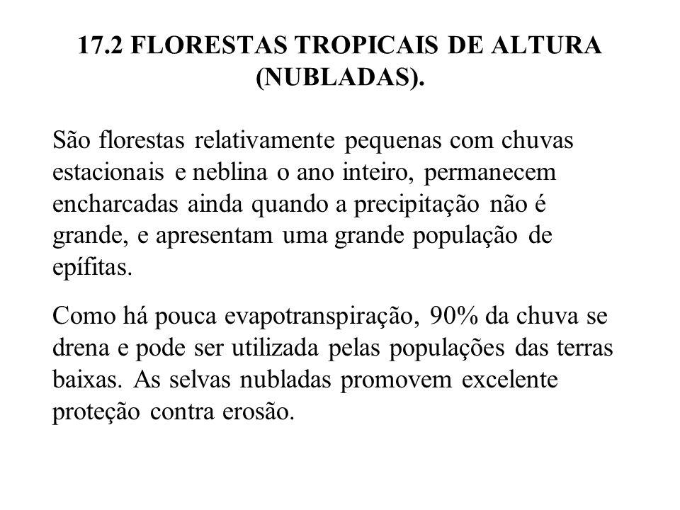 17.2 FLORESTAS TROPICAIS DE ALTURA (NUBLADAS).