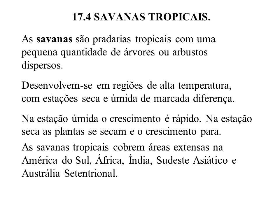 17.4 SAVANAS TROPICAIS. As savanas são pradarias tropicais com uma pequena quantidade de árvores ou arbustos dispersos.