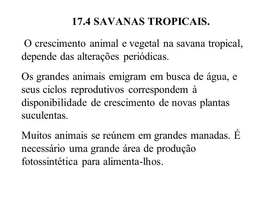 17.4 SAVANAS TROPICAIS. O crescimento animal e vegetal na savana tropical, depende das alterações periódicas.