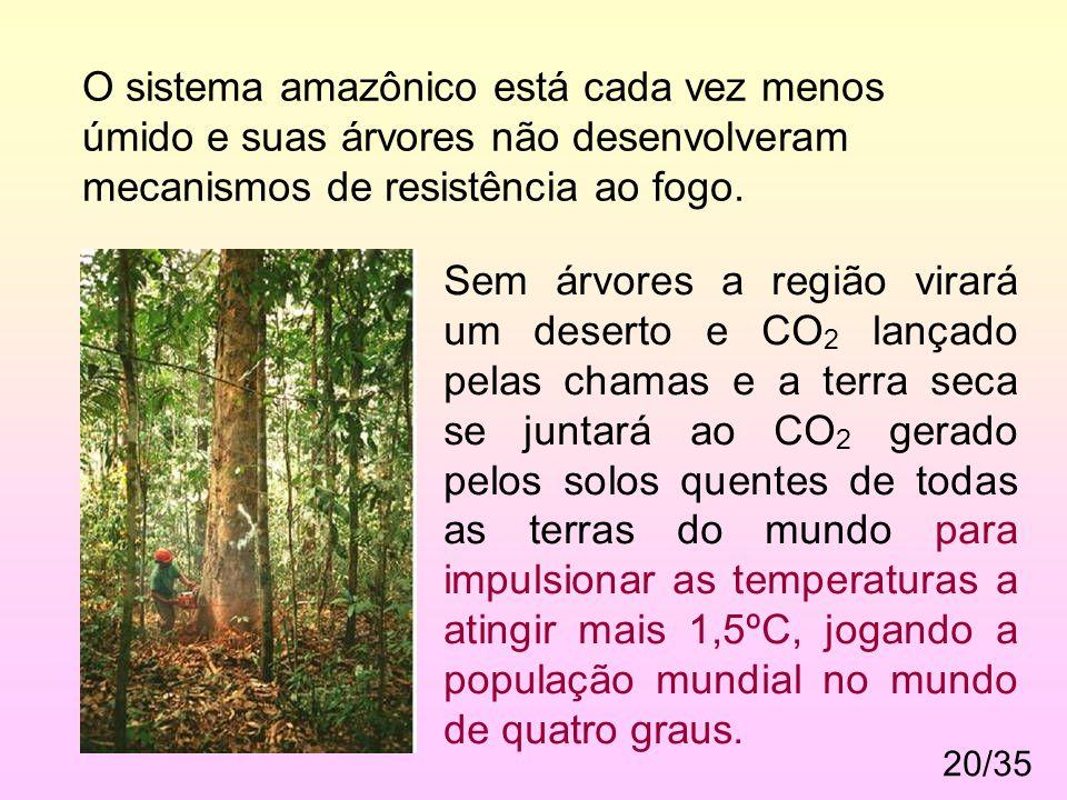 O sistema amazônico está cada vez menos úmido e suas árvores não desenvolveram mecanismos de resistência ao fogo.