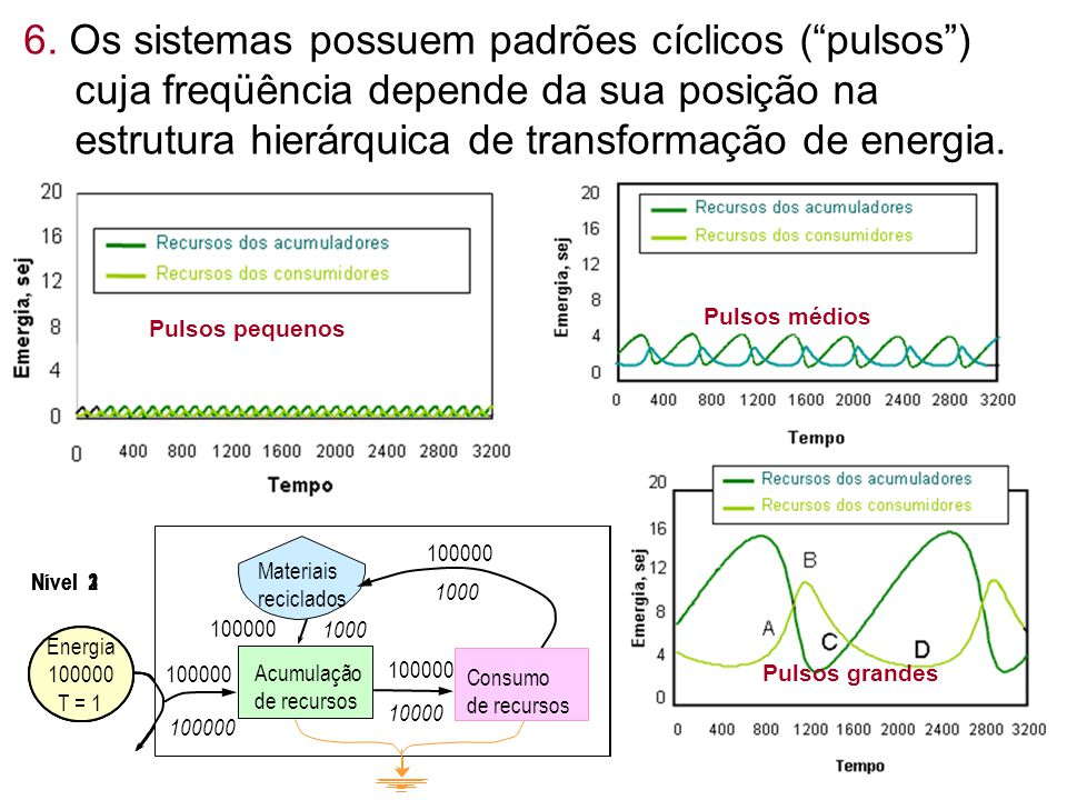 6. Os sistemas possuem padrões cíclicos ( pulsos ) cuja freqüência depende da sua posição na estrutura hierárquica de transformação de energia.