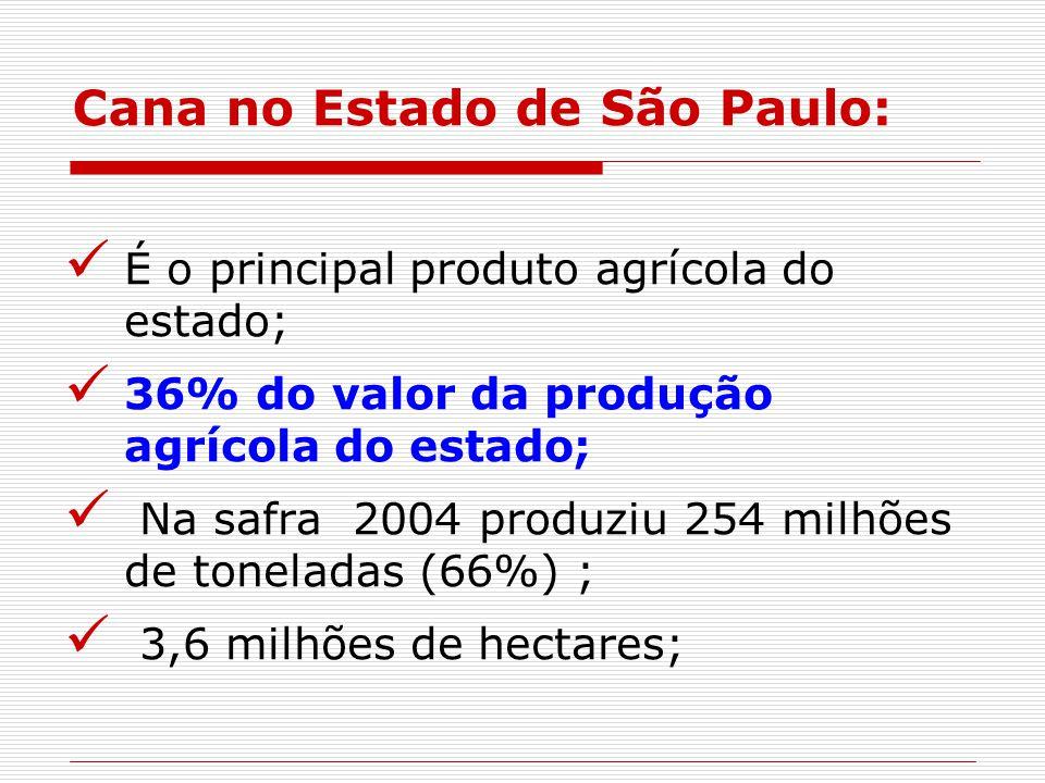 Cana no Estado de São Paulo:
