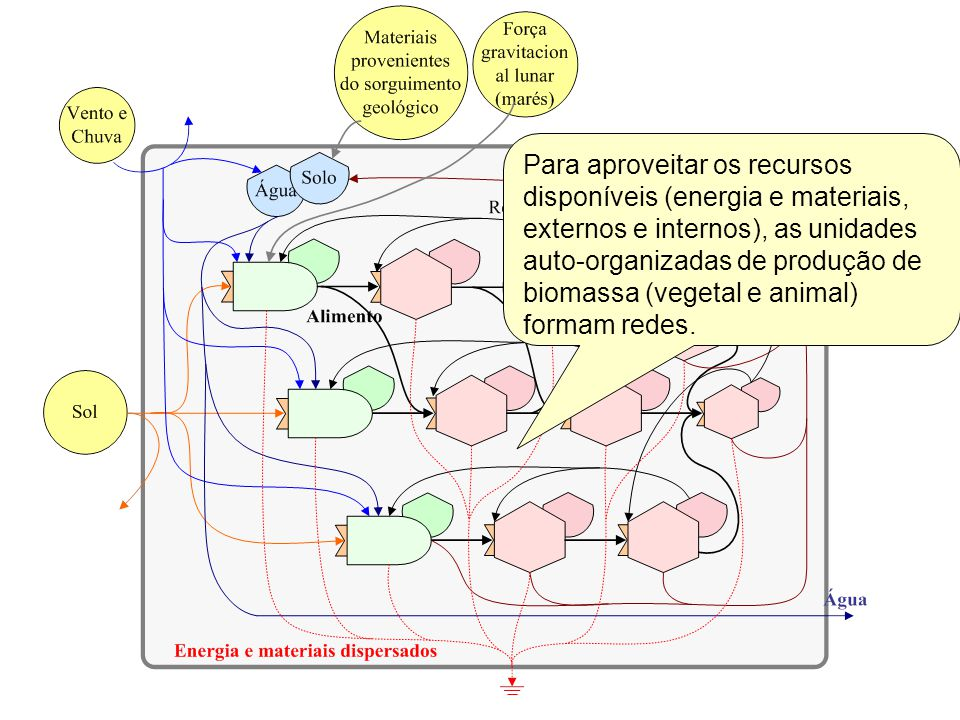 Para aproveitar os recursos disponíveis (energia e materiais, externos e internos), as unidades auto-organizadas de produção de biomassa (vegetal e animal) formam redes.