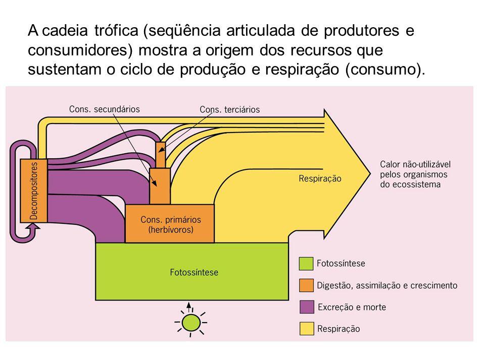 A cadeia trófica (seqüência articulada de produtores e consumidores) mostra a origem dos recursos que sustentam o ciclo de produção e respiração (consumo).