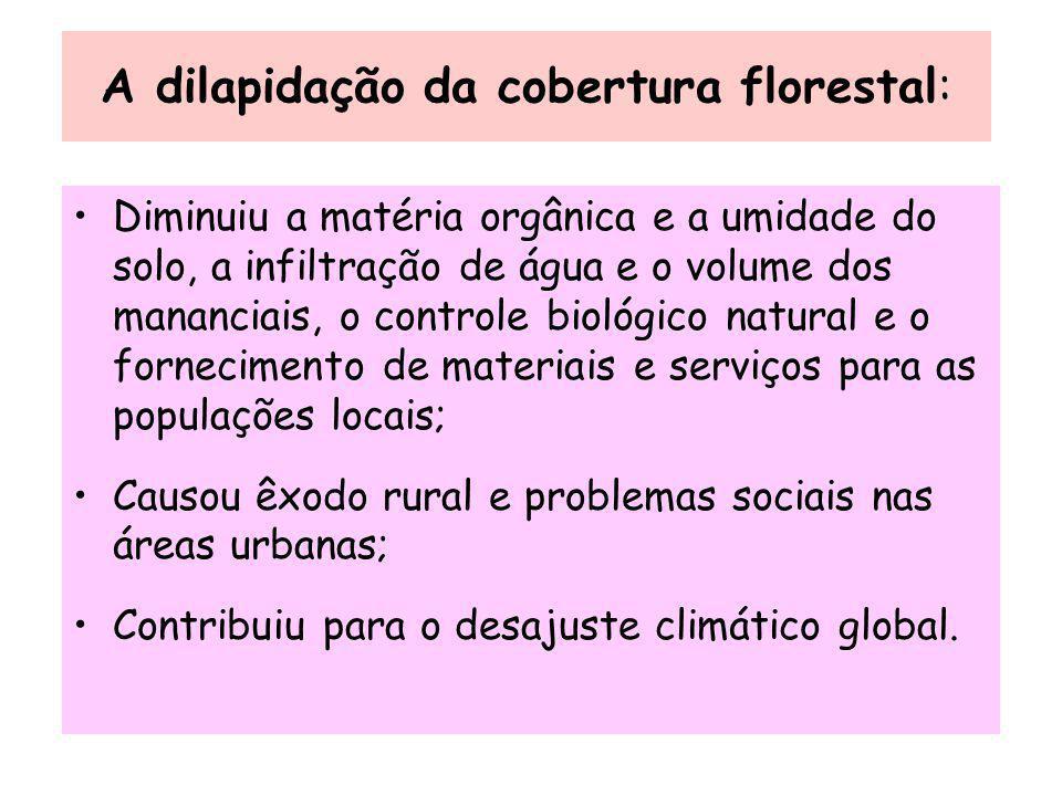 A dilapidação da cobertura florestal: