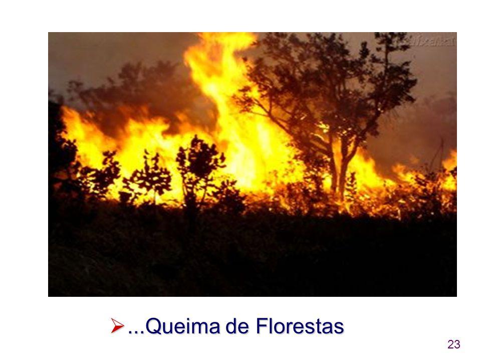 ...Queima de Florestas
