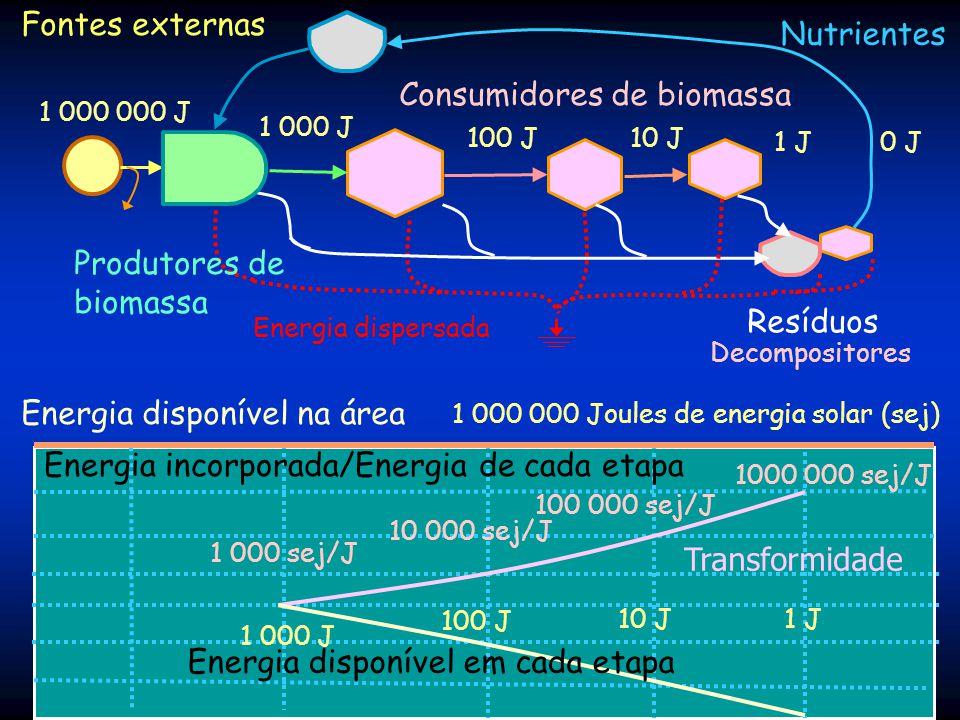 Consumidores de biomassa