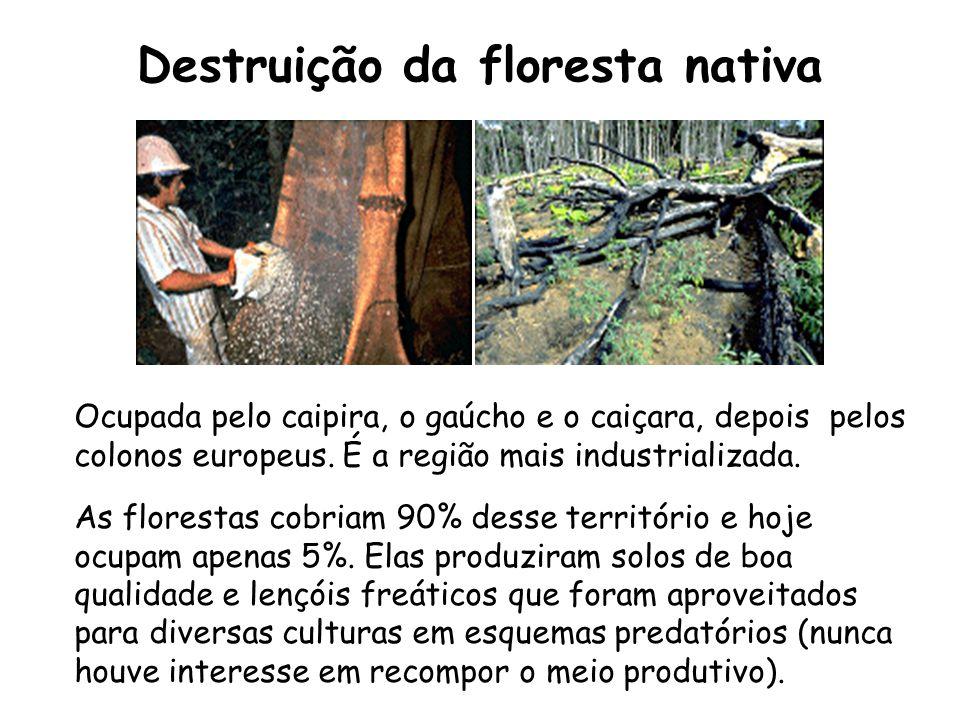Destruição da floresta nativa