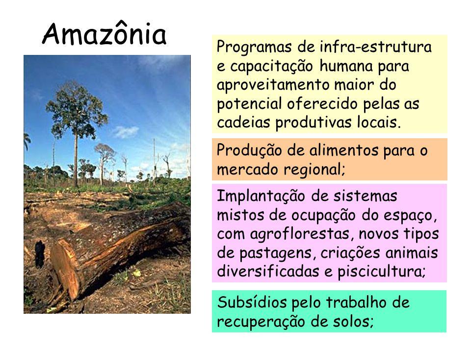 Amazônia Programas de infra-estrutura e capacitação humana para aproveitamento maior do potencial oferecido pelas as cadeias produtivas locais.
