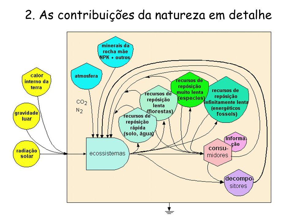 2. As contribuições da natureza em detalhe