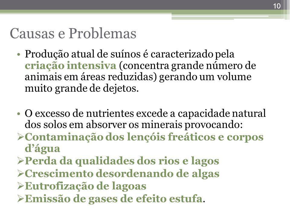 Causas e Problemas