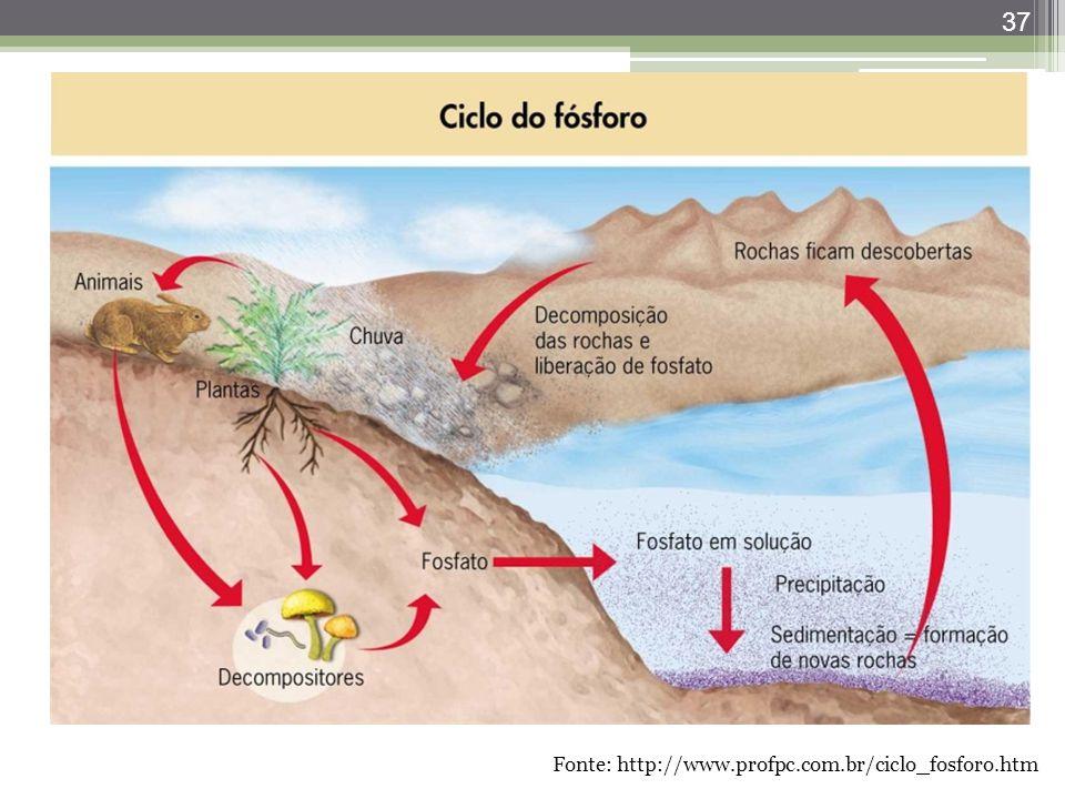 Fonte: http://www.profpc.com.br/ciclo_fosforo.htm