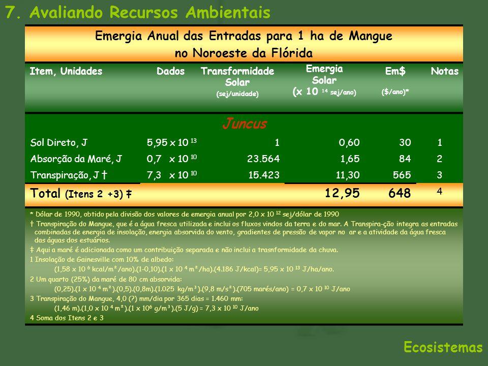 Emergia Anual das Entradas para 1 ha de Mangue