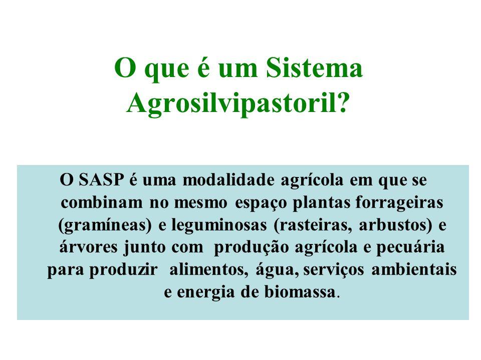O que é um Sistema Agrosilvipastoril
