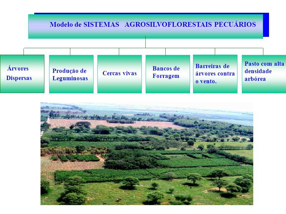 Modelo de SISTEMAS AGROSILVOFLORESTAIS PECUÁRIOS