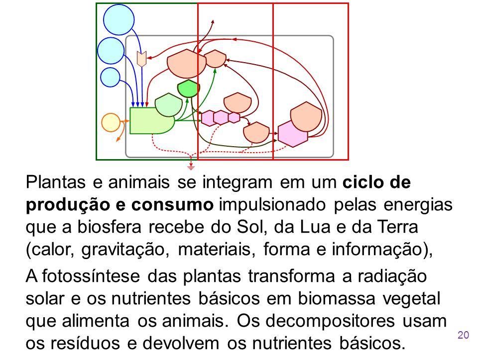 Plantas e animais se integram em um ciclo de produção e consumo impulsionado pelas energias que a biosfera recebe do Sol, da Lua e da Terra (calor, gravitação, materiais, forma e informação),