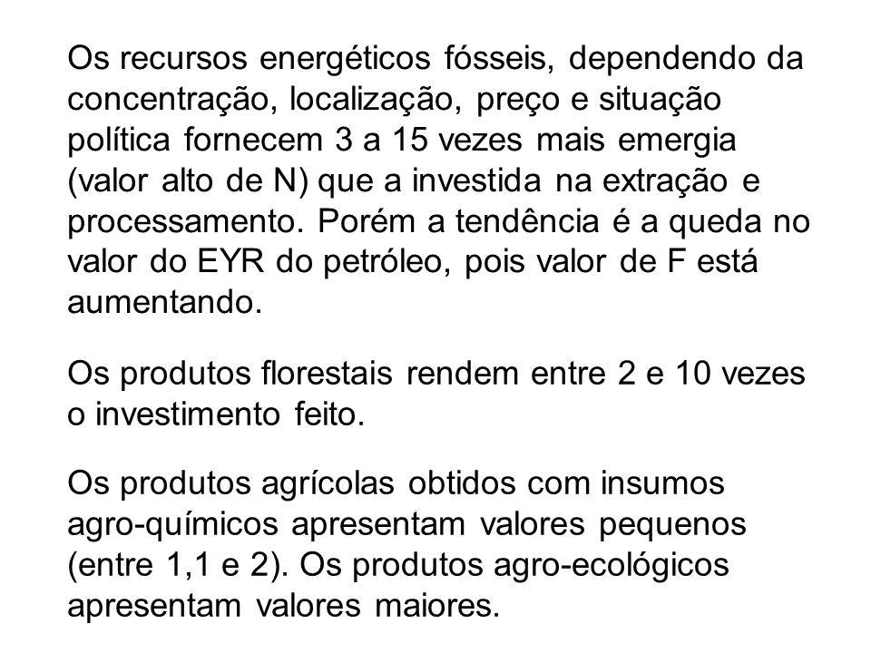 Os produtos florestais rendem entre 2 e 10 vezes o investimento feito.