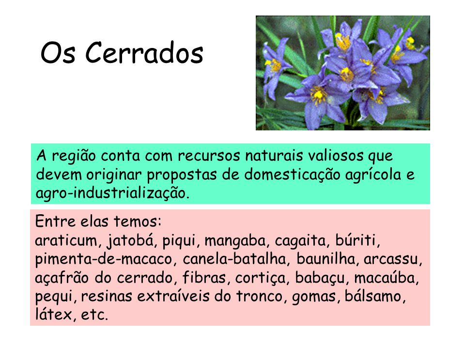 Os Cerrados A região conta com recursos naturais valiosos que devem originar propostas de domesticação agrícola e agro-industrialização.