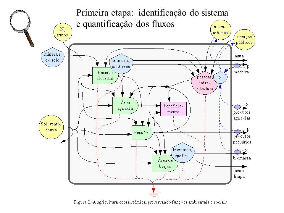 Primeira etapa: identificação do sistema e quantificação dos fluxos