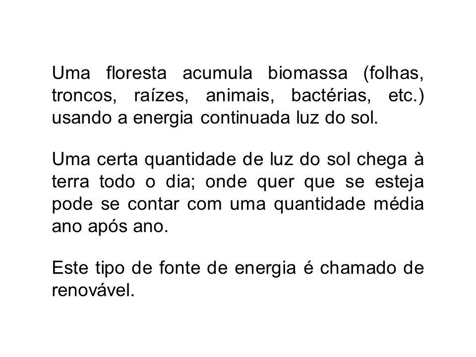 Uma floresta acumula biomassa (folhas, troncos, raízes, animais, bactérias, etc.) usando a energia continuada luz do sol.