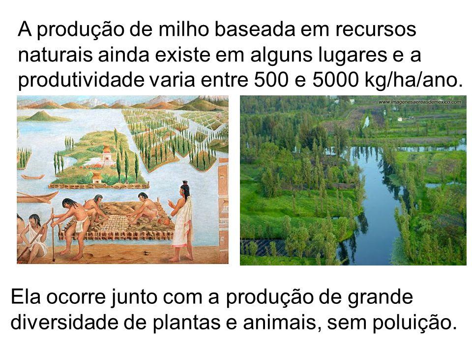 A produção de milho baseada em recursos naturais ainda existe em alguns lugares e a produtividade varia entre 500 e 5000 kg/ha/ano.