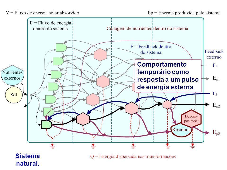 Comportamento temporário como resposta a um pulso de energia externa