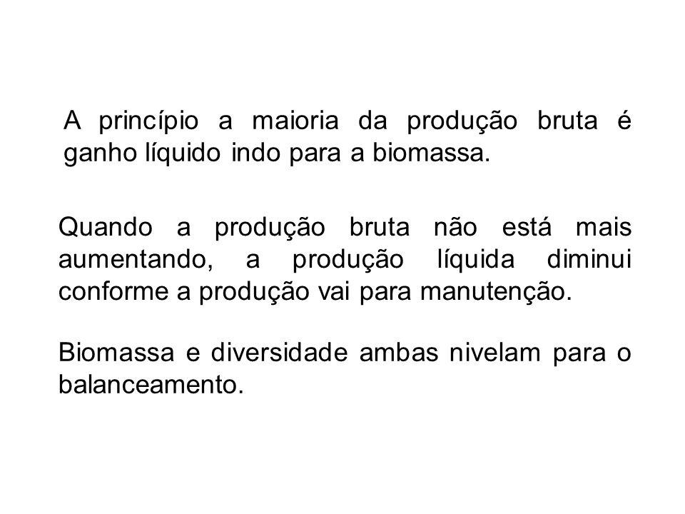 A princípio a maioria da produção bruta é ganho líquido indo para a biomassa.