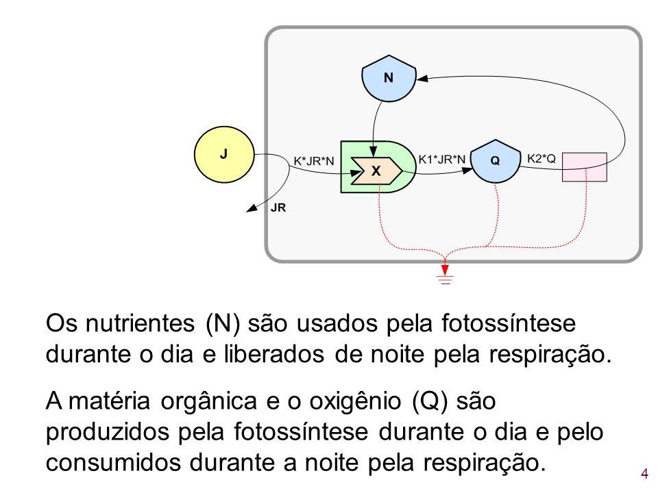 Os nutrientes (N) são usados pela fotossíntese durante o dia e liberados de noite pela respiração.