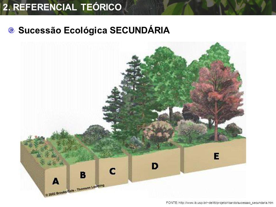 Sucessão Ecológica SECUNDÁRIA