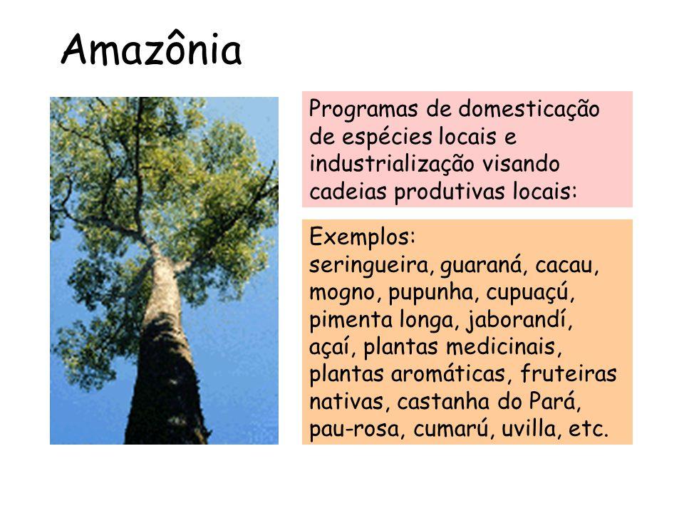 Amazônia Programas de domesticação de espécies locais e industrialização visando cadeias produtivas locais: