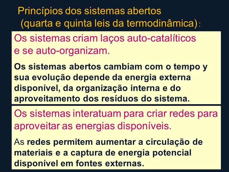 Os sistemas criam laços auto-catalíticos e se auto-organizam.