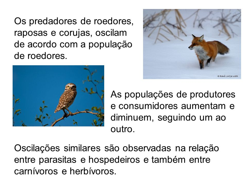 Os predadores de roedores, raposas e corujas, oscilam de acordo com a população de roedores.