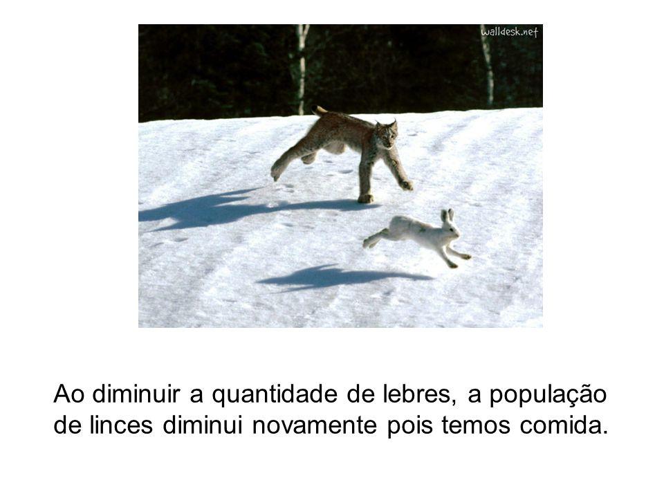 Ao diminuir a quantidade de lebres, a população de linces diminui novamente pois temos comida.