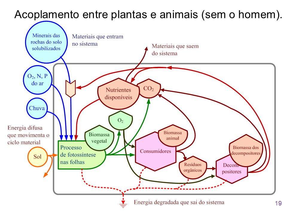 Acoplamento entre plantas e animais (sem o homem).
