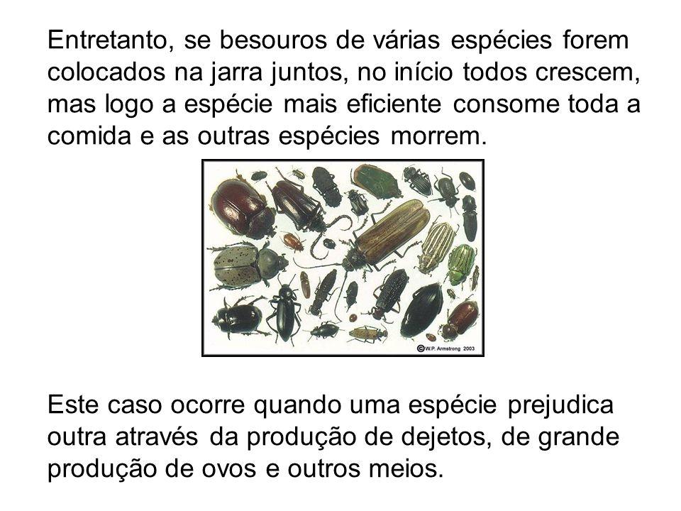 Entretanto, se besouros de várias espécies forem colocados na jarra juntos, no início todos crescem, mas logo a espécie mais eficiente consome toda a comida e as outras espécies morrem.