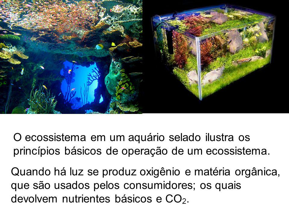 O ecossistema em um aquário selado ilustra os princípios básicos de operação de um ecossistema.