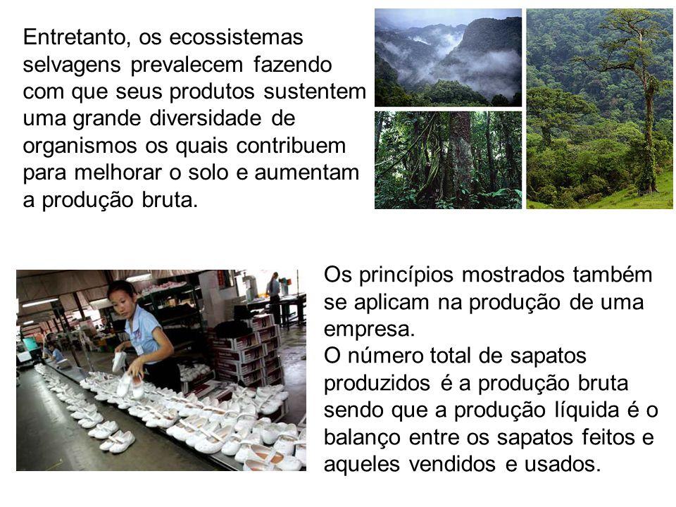 Entretanto, os ecossistemas selvagens prevalecem fazendo com que seus produtos sustentem uma grande diversidade de organismos os quais contribuem para melhorar o solo e aumentam a produção bruta.