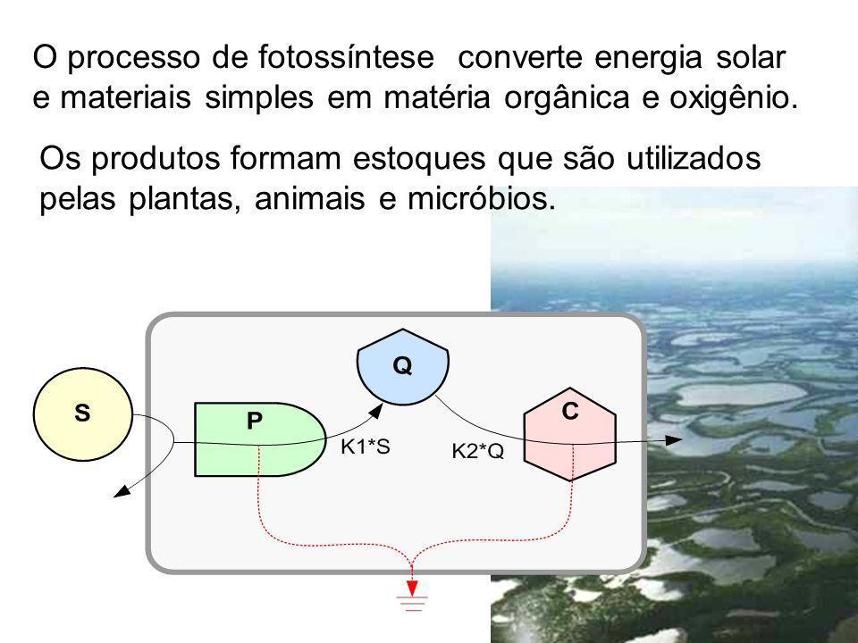 O processo de fotossíntese converte energia solar e materiais simples em matéria orgânica e oxigênio.