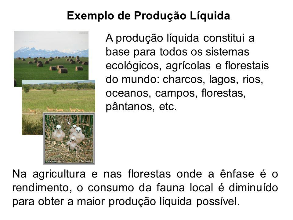 Exemplo de Produção Líquida