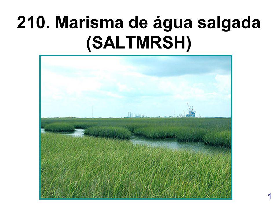210. Marisma de água salgada (SALTMRSH)