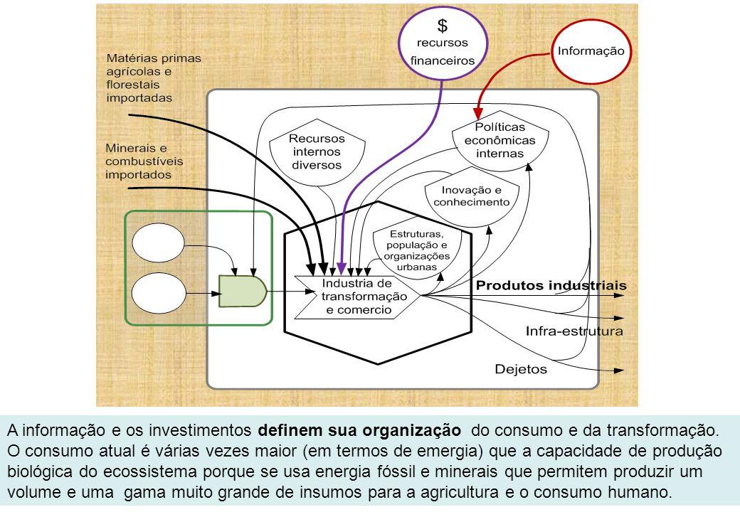 A informação e os investimentos definem sua organização do consumo e da transformação.