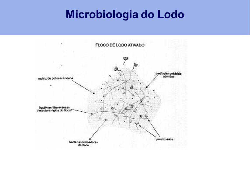 Microbiologia do Lodo
