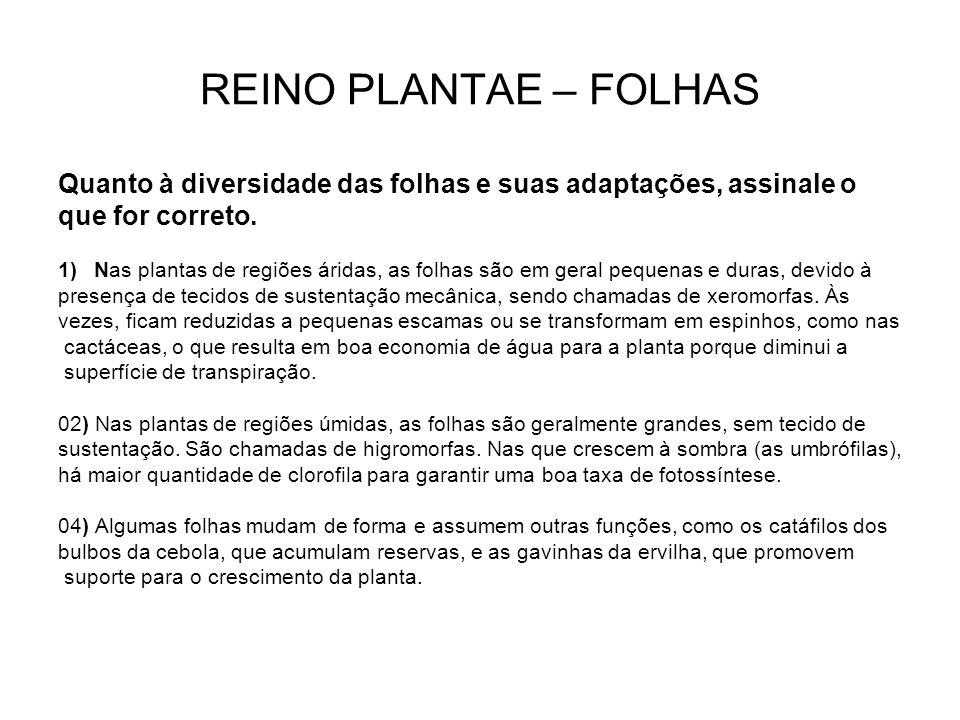 REINO PLANTAE – FOLHAS Quanto à diversidade das folhas e suas adaptações, assinale o. que for correto.