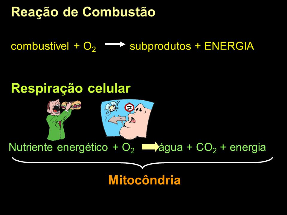 Reação de Combustão Respiração celular Mitocôndria