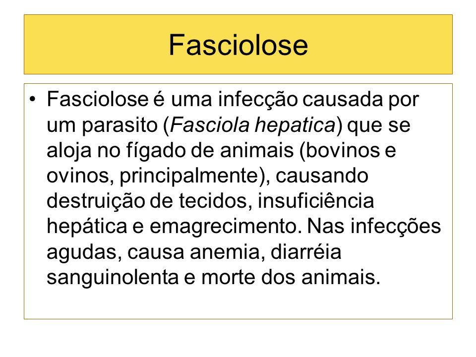 Fasciolose